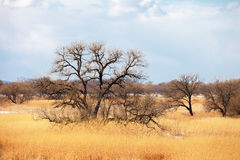 Lonely tree in spring field Stock Photography