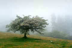 Lonely tree in spring Stock Image