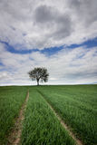 Lonely tree in spring green field Royalty Free Stock Photo