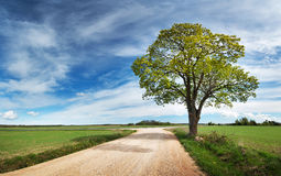 Lonely tree in spring near gravel road Stock Photo