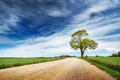Lonely tree in spring near gravel road Stock Image
