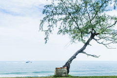 Lonely tree and stairs by the beach Stock Image