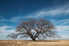 Lonely Tree. A tree standing alone in a pasture royalty free stock image