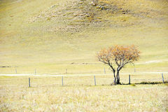 Lonely tree standing in autumn field Stock Images