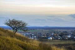 Lonely tree standing on a hill overlooking a city.  Royalty Free Stock Photo