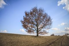 A lonely tree standing in the Olympic park in Munich. Autumn makes the leaves fall Royalty Free Stock Photo