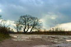 A lonely tree. Standing by the roadside on the roadside at sunset in cloudy overcast weather Stock Photos