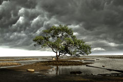 Lonely tree. Tree that stands alone in the sea Stock Photography