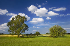 Lonely tree stands in the meadow. It is a sunny day with blue sky and white clouds stock photo