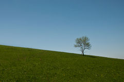 Lonely tree Royalty Free Stock Photos