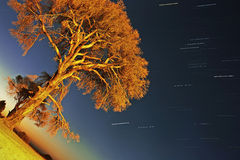 A lonely tree and star trails in Cirali Stock Photos