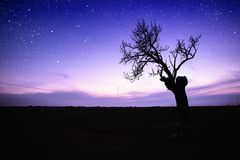 Lonely tree. Starry sky over lonely tree silhouette Stock Image