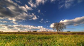 Lonely tree staying in the field. With dramatic clouds above Stock Images