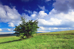 Lonely tree and steppe Stock Images
