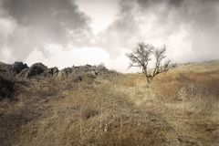 Lonely tree in the steppe on a hill in late fall. In mountains Royalty Free Stock Photo