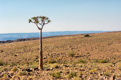 Lonely tree in stone desert Stock Photography