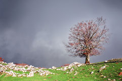 Lonely tree with stormy clouds Stock Photos