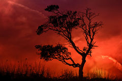 Lonely Tree with striking sunset stock image