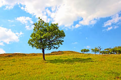 Lonely tree in Summer Stock Photos