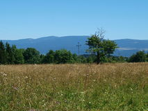 Lonely tree on a summer meadow , mountains in the background. Poland Stock Photos