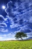 Lonely Tree and Sun. Green field, tree and sky with the clouds and sun Stock Photo