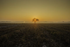 Lonely tree. On sunrise back ground Royalty Free Stock Photos