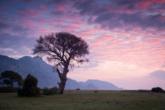 Lonely tree during sunrise Stock Photos