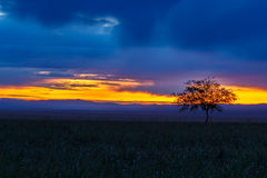 Lonely tree, sunrise field. Stock Photography