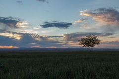 Lonely tree, sunrise field. Royalty Free Stock Photography