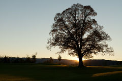 Lonely tree at sunrise Royalty Free Stock Photography