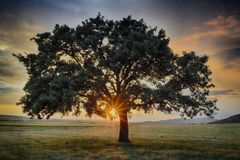 Lonely tree at sunrise in a meadow. Royalty Free Stock Images