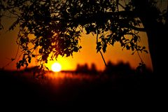 Lonely tree sunrise Royalty Free Stock Photography