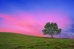 Lonely tree at sunrise with red sky Stock Photos