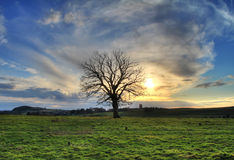 Lonely tree at sunset. Irish meadow with lonely tree at sunset HDR Royalty Free Stock Images