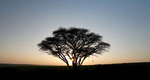 Lonely tree at sunset Royalty Free Stock Photography