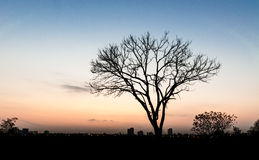 Lonely tree. The lonely tree in sunset Royalty Free Stock Photo