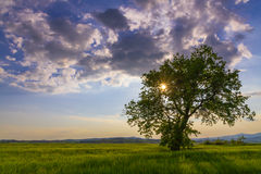 Lonely tree at sunset. Lonely tree against a beautiful setting sun Stock Images