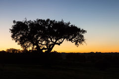 Tree at sunset in Alentejo, Portugal. Sunset over field with silhouette of tree in Alentejo, Portugal Stock Photo