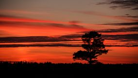 Lonely tree on sunset background. Beautiful sunset of the October Sun. Very romantic sight royalty free stock photo
