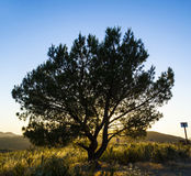 Lonely tree in sunset. In bright colors Royalty Free Stock Images