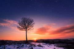 Lonely tree at sunset. Bulgaria Stock Image