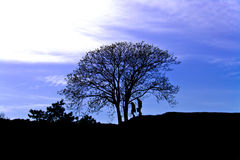 Lonely tree at sunset and a couple of lovers Royalty Free Stock Images