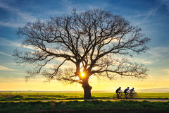 Lonely tree and sunset Royalty Free Stock Images