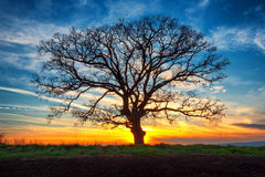 Lonely tree and sunset Stock Image