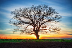 Lonely tree and sunset Stock Photos