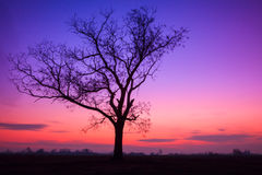 Lonely tree at sunset. In Hungary Royalty Free Stock Photography