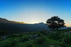 Lonely tree at sunset and Lekanda peak Royalty Free Stock Image