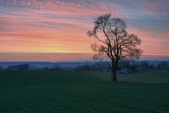 Lonely tree at sunset Royalty Free Stock Photos