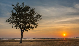 Lonely Tree in Sunset Moment Royalty Free Stock Photo