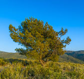 Lonely tree in sunset. Lonely tree in mountain area in sunset Stock Photo